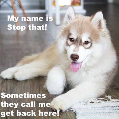 husky puppy name meme