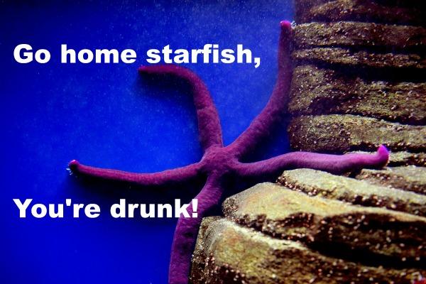 Go home you're drunk memes: drunken starfish