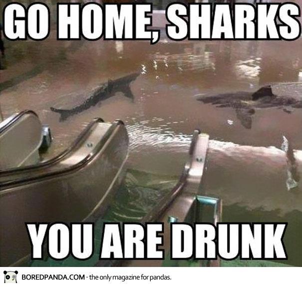 drunk sharks meme