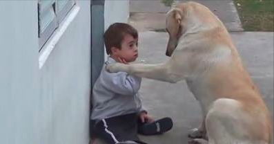 World's Sweetest Dog Befriends Child with Down Syndrome