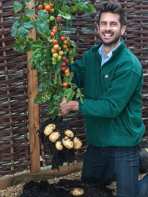 "The New ""TomTato"" Plant - <a href=""http://jessexplainsitall.com/the-new-tomtato-plant/"" target=""_blank"">Jess Explains It All</a>"