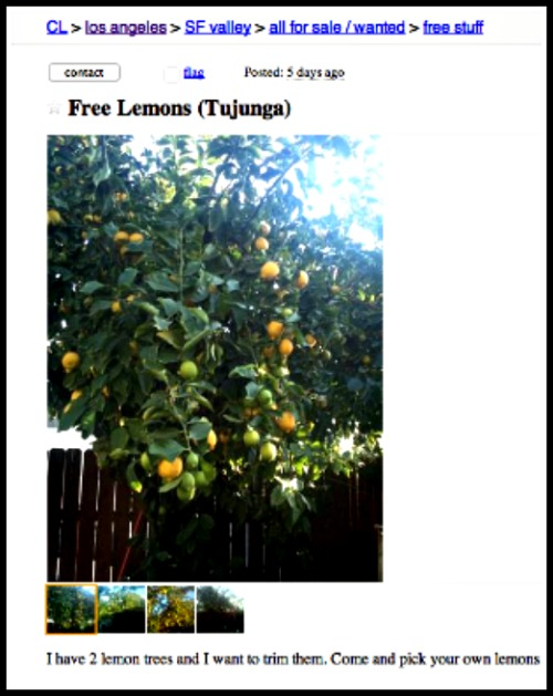 """When Life Gives You Lemons...- <a href=""""http://jessexplainsitall.com/when-life-gives-you-lemons/"""" target=""""_blank"""">Jess Explains It All</a>"""