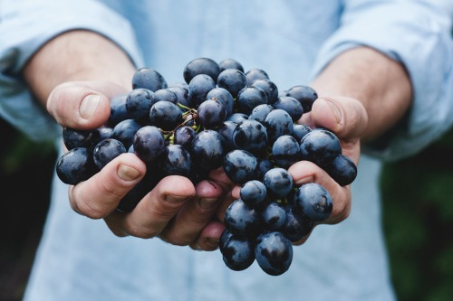 I love fresh blueberries.  Check out my post about places to go in Los Angeles, featuring the Culver City farmers market!