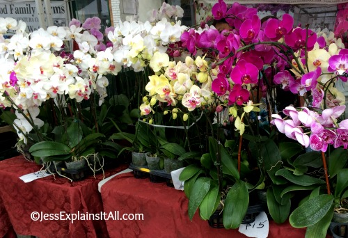 So many pretty orchids for sale at the culver city farmers market.  Read more on the blog!