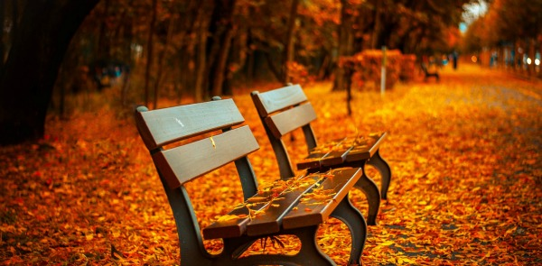 looking forward to October - fall park bench with leaves
