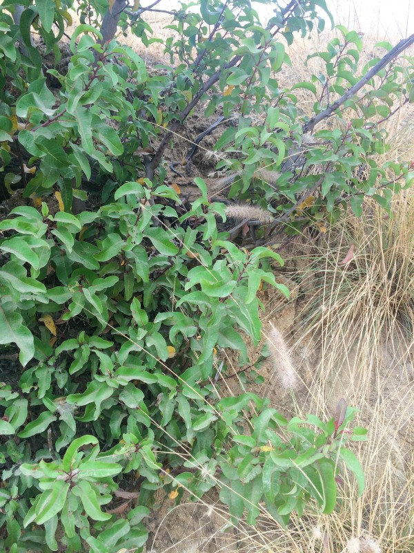 A small snake hiding in the bushes.