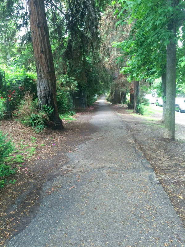 A paved path with large trees on either side.