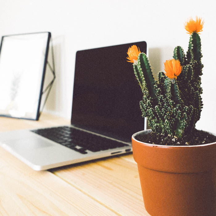a computer, and cactus on a home office desk.